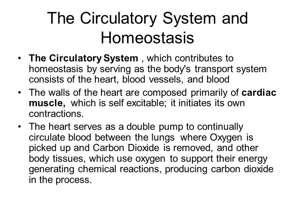 homeostasis and the circulatory system