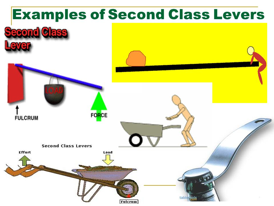 Movement In The Human Body Ppt Video Online Download