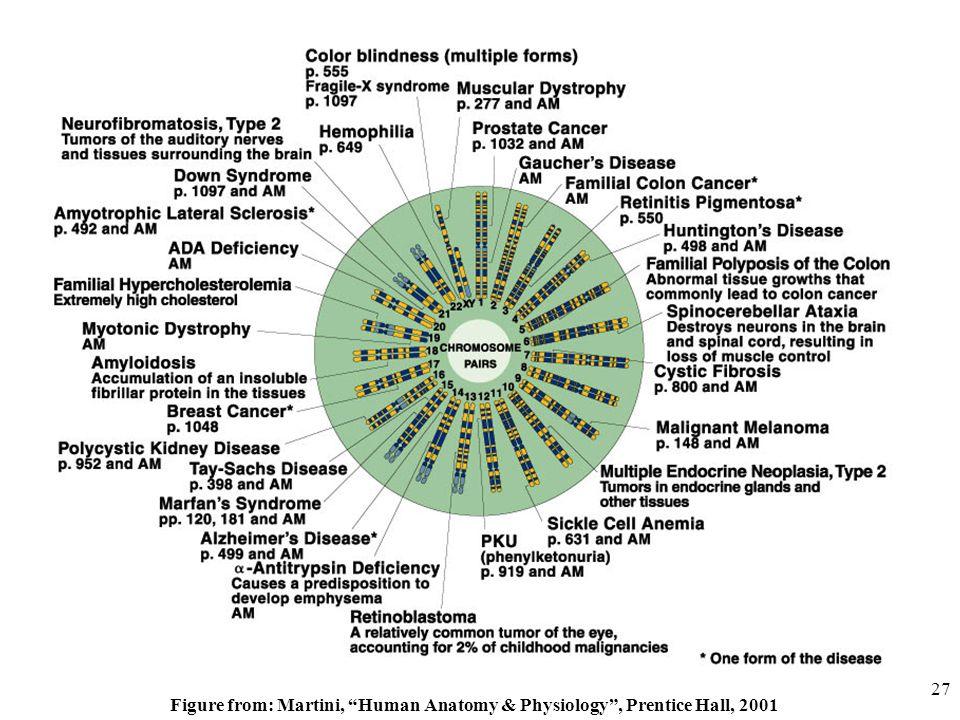 Martini Human Anatomy Images - human body anatomy