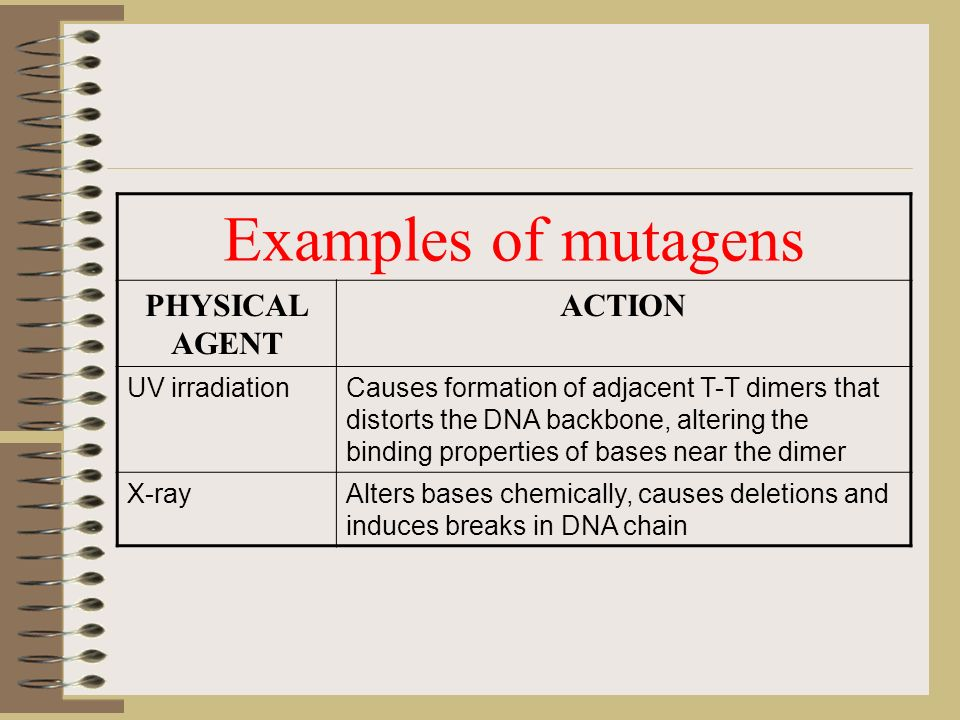 Chair Of Microbiology Virology And Immunology Ppt Video Online