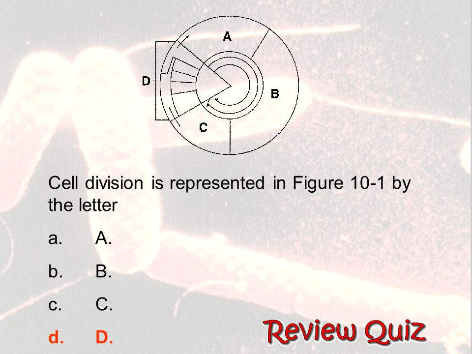 Chapter 5: Cell Growth and Division   ppt download