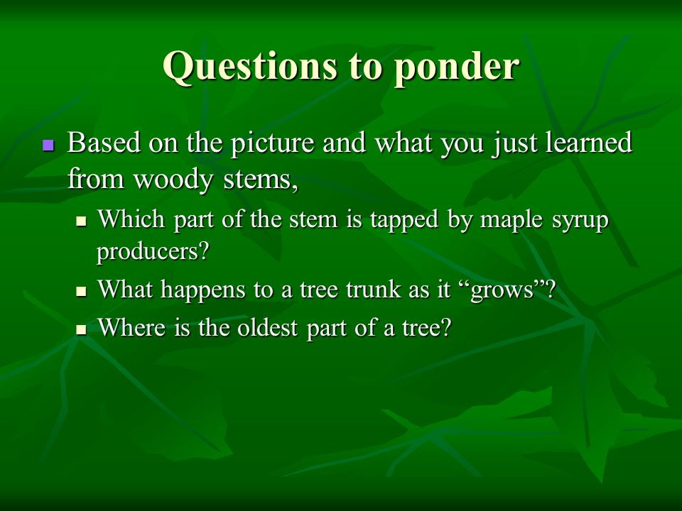 Parts Of A Vascular Plant Ppt Video Online Download. Worksheet. Tapped Worksheet Questions At Clickcart.co