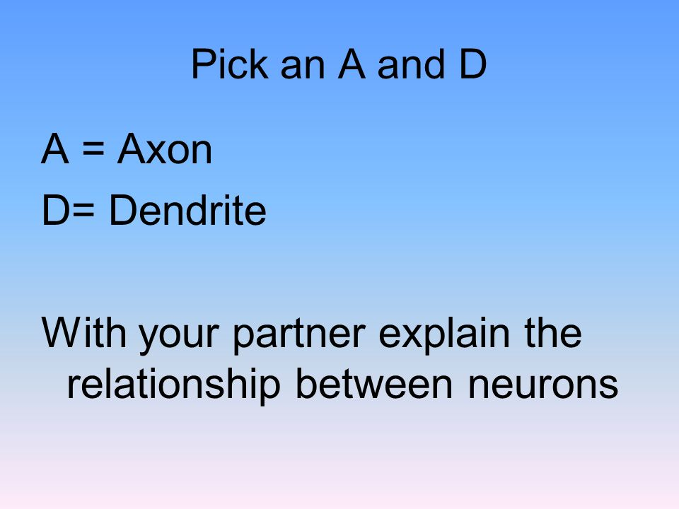 With your partner explain the relationship between neurons