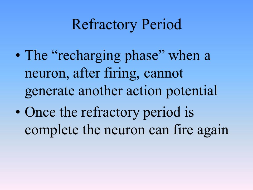 Refractory Period The recharging phase when a neuron, after firing, cannot generate another action potential.