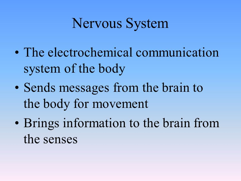 Nervous System The electrochemical communication system of the body