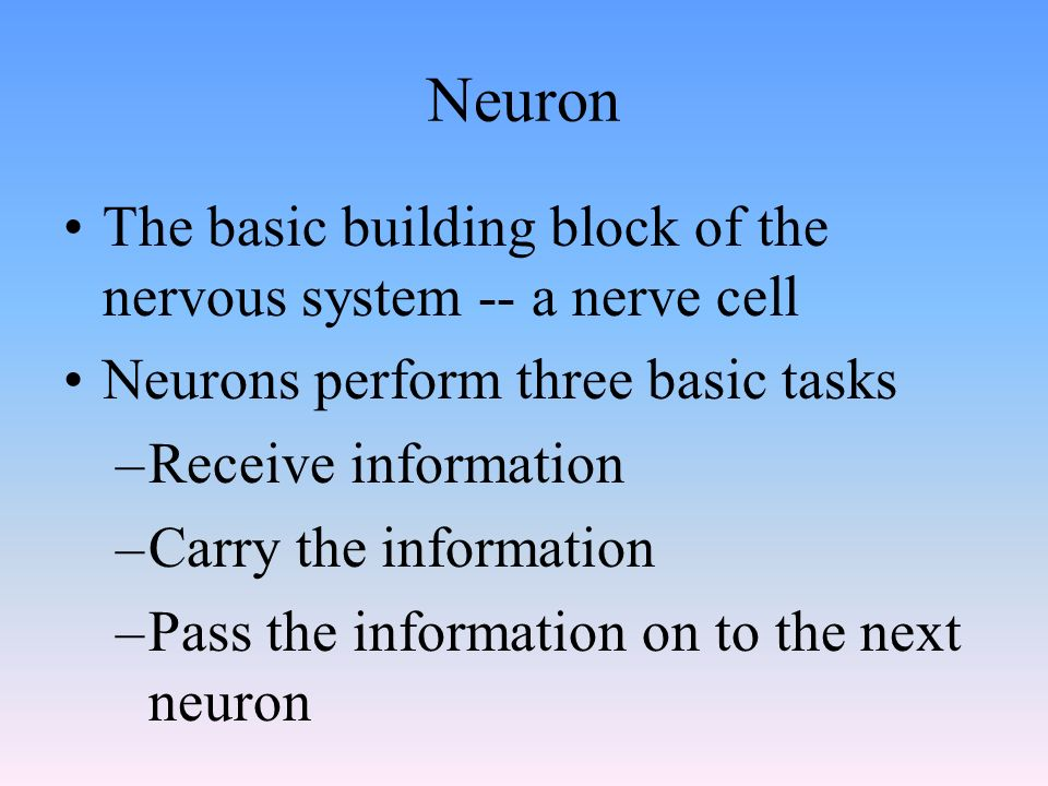 Neuron The basic building block of the nervous system -- a nerve cell