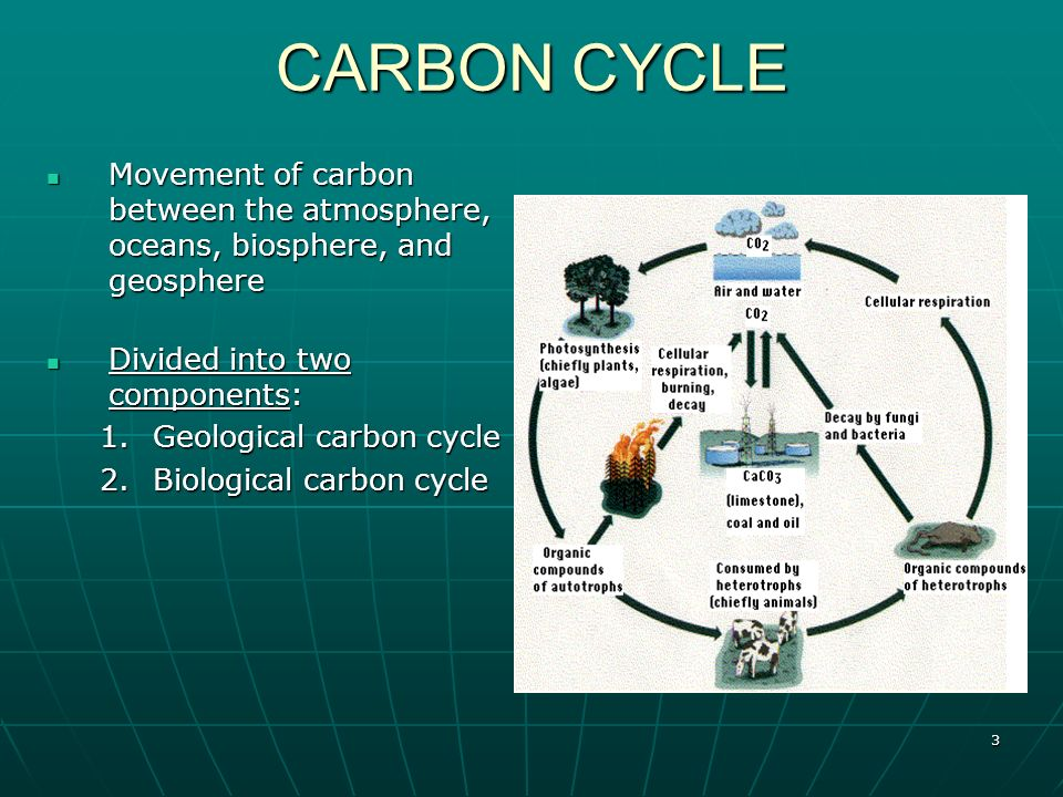 does cellular respiration impact global warming