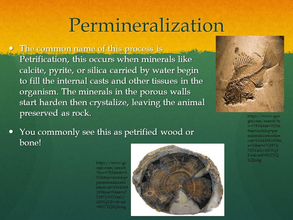 Permineralization Process
