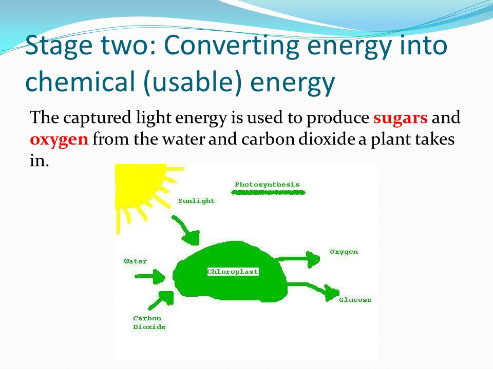 ________ capture solar energy and use photosynthesis to produce sugars