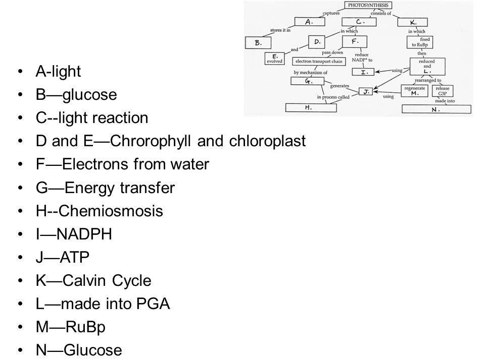Fill In Photosynthesis Concept Map Review Book Chapter 6