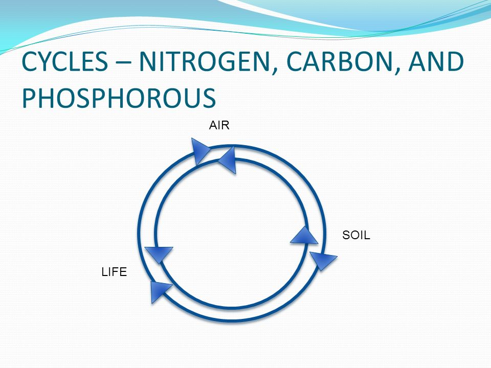 Biogeochemical cycles ppt video online download 9 cycles nitrogen carbon ccuart Gallery