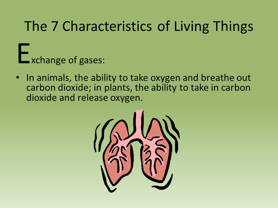 seven characteristics of human The seven deadly sins form a rather negative view of human nature here, we examine six (more positive) traits that all humans share.