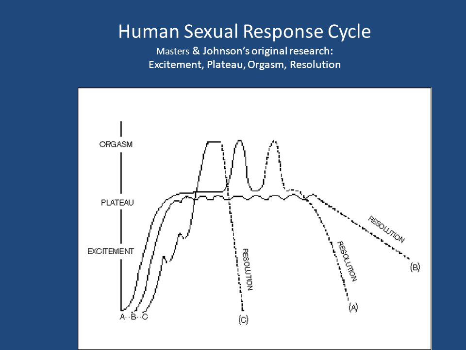 Masters and johnson sexual response cycle Nude Photos 41