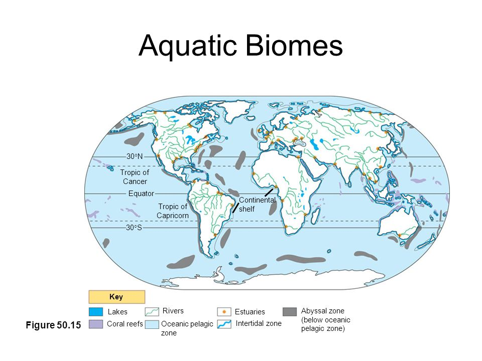 biomes of the world The seven biomes of earth are water, rainforest, tundra, desert, taiga, deciduous forest and grassland a biome is a large geographical area classified by its distinctive group of plants and animals adapted to the environment.
