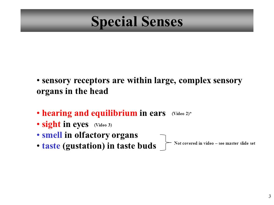 Bonito Anatomy And Physiology Special Senses Powerpoint Ornamento ...
