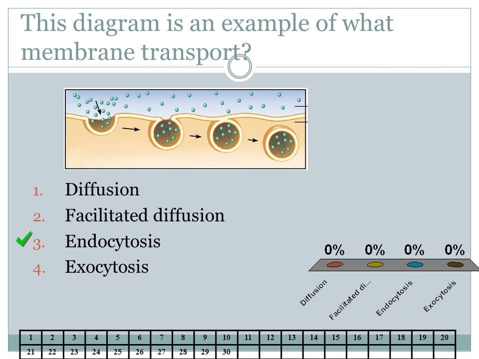 Cell Membrane Transport Notes Ppt Download