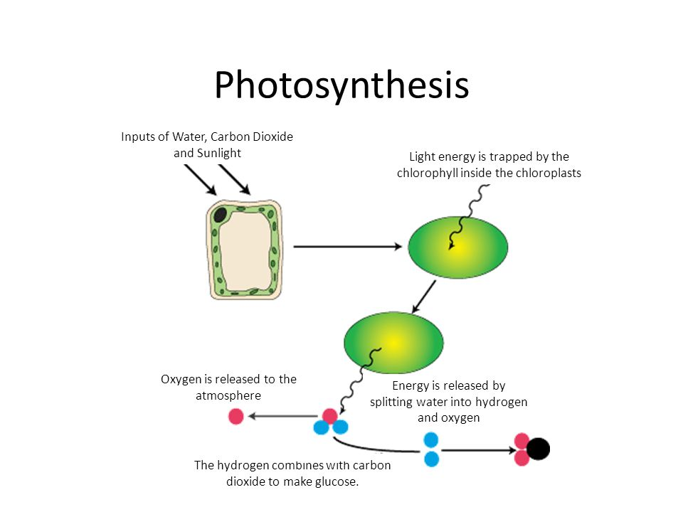 Photosynthesis Label The Diagram Carbon Dioxide Glucose Oxygen