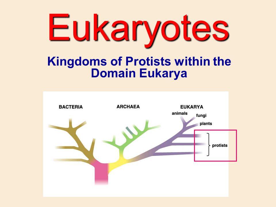 Kingdoms Of Protists Within The Domain Eukarya