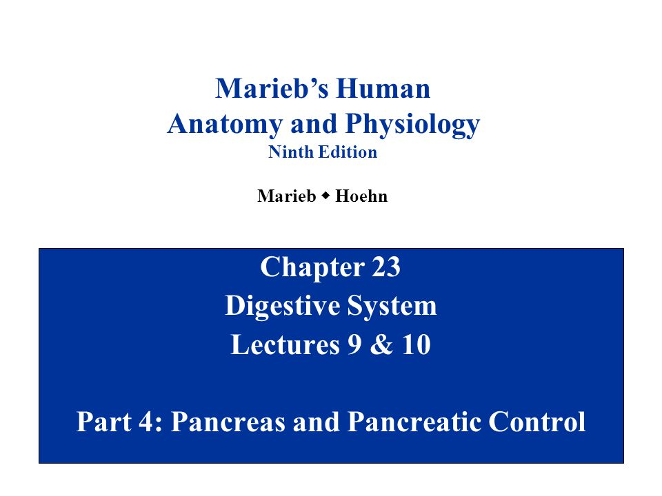 Anatomy and Physiology Part 4: Pancreas and Pancreatic Control - ppt ...