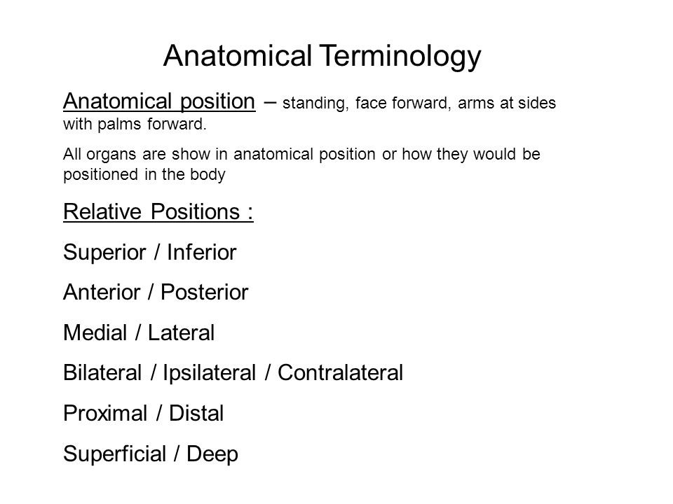 Relative positions anatomy 5678063 - follow4more.info
