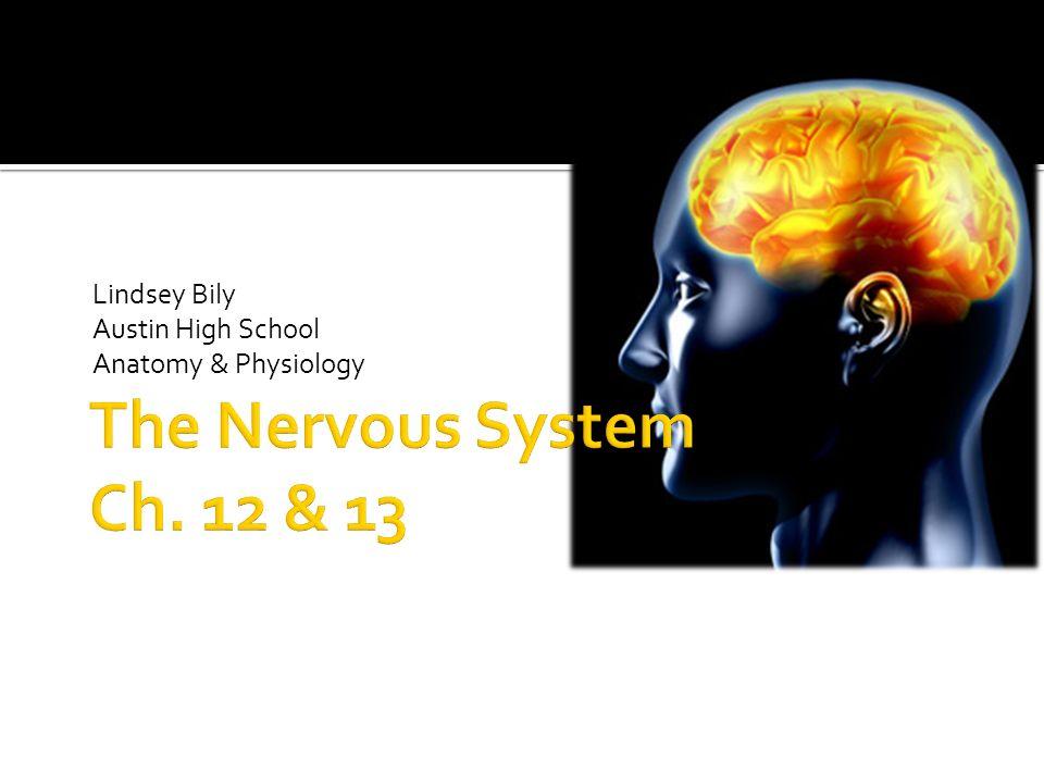 Lindsey Bily Austin High School Anatomy & Physiology - ppt download