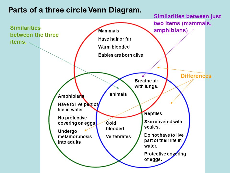 Venn diagram venn diagrams are tools used to describe and compare parts of a three circle venn diagram ccuart Gallery
