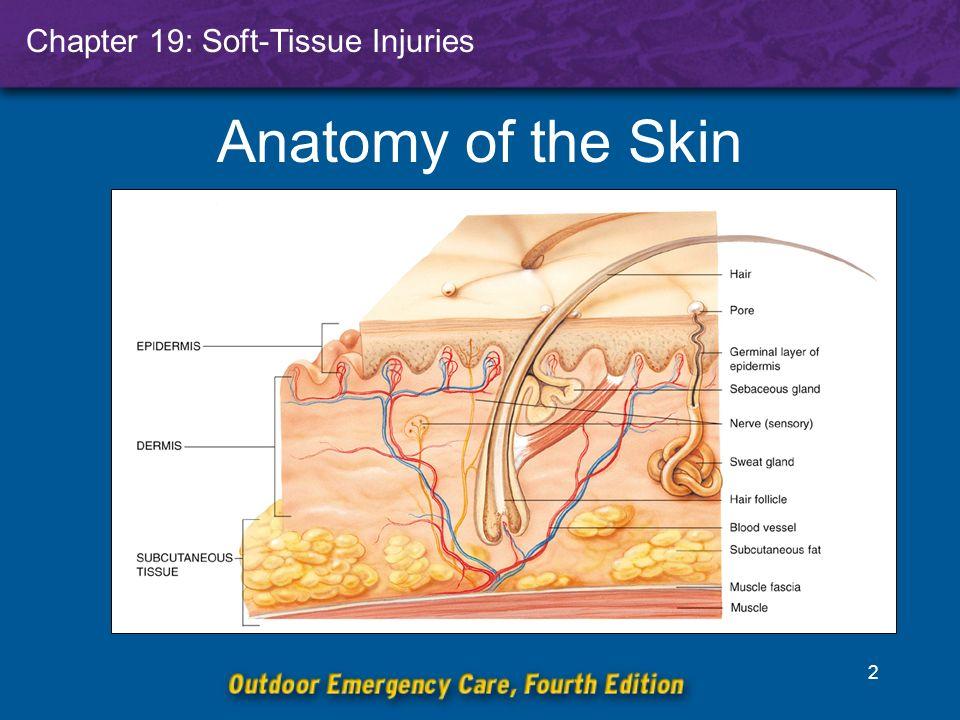Skin Layers Anatomy Images - human body anatomy