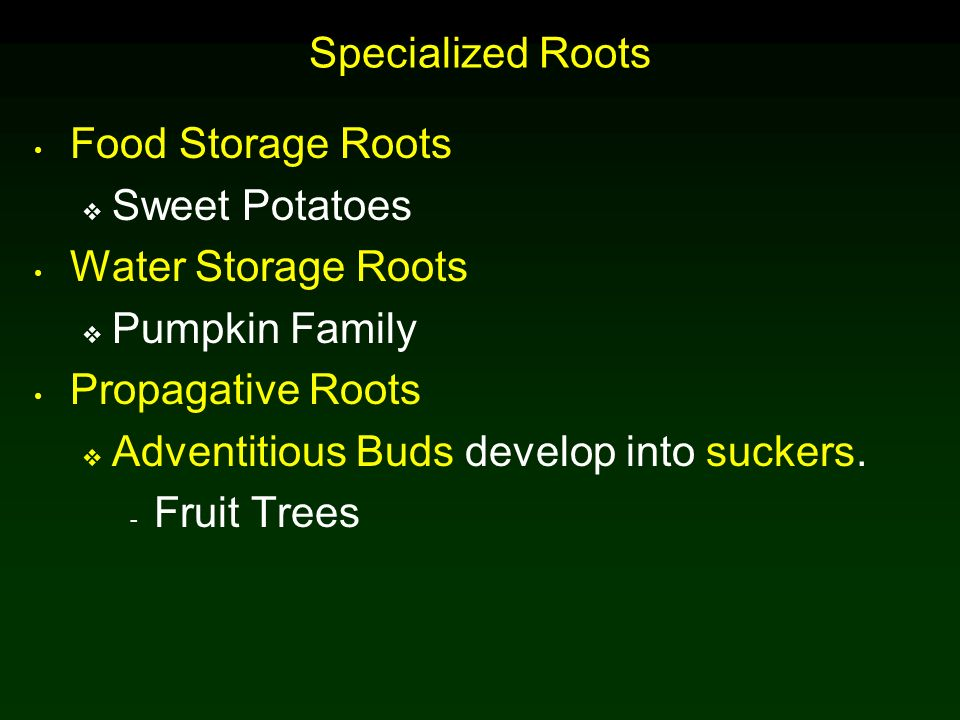Specialized Roots Food Storage Roots. Sweet Potatoes. Water Storage Roots. Pumpkin Family.  sc 1 st  SlidePlayer & Specialized Roots Food Storage Roots Sweet Potatoes Water Storage ...
