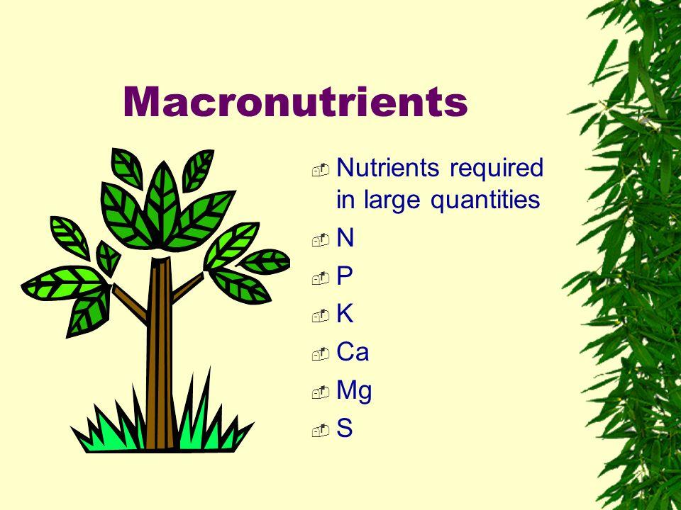 Plant Nutrition Vs Plant Fertilization Ppt Video Online Download