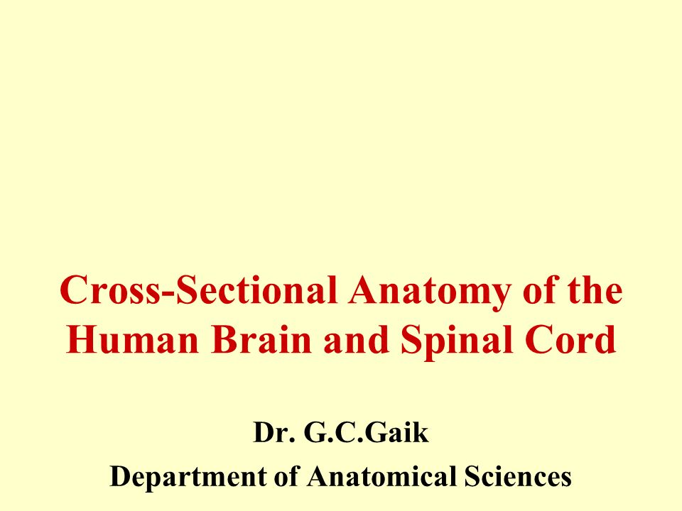 Cross-Sectional Anatomy of the Human Brain and Spinal Cord - ppt ...
