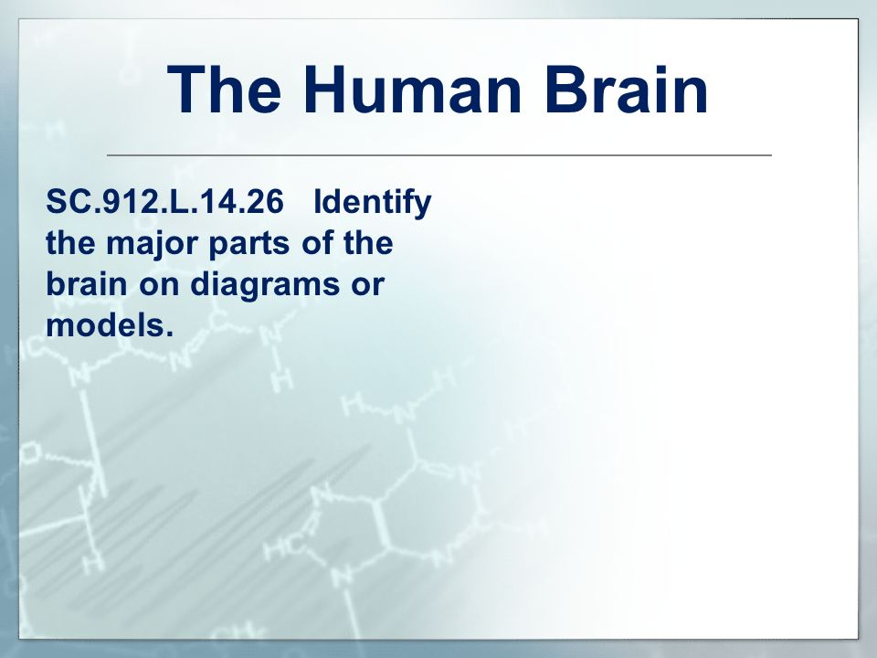 The Human Brain SC.912.L Identify the major parts of the brain on diagrams or models.