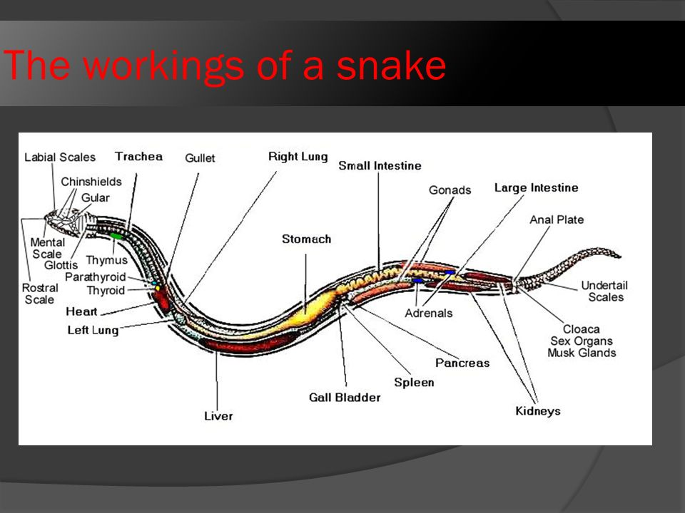 The+workings+of+a+snake black mamba diagram free wiring diagram for you \u2022