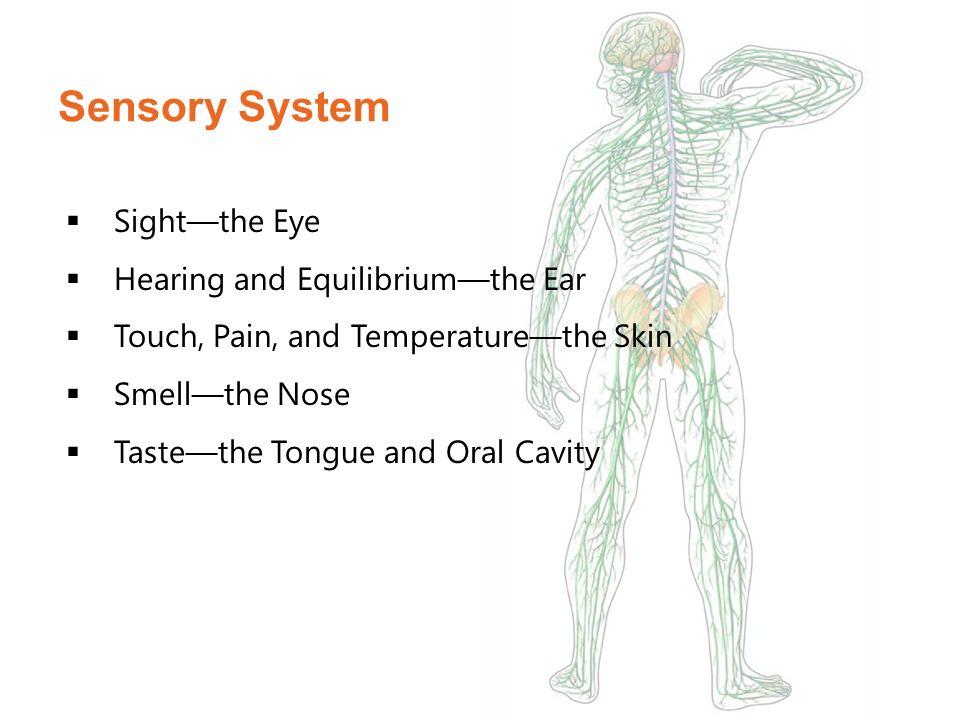 Nervous & Sensory Systems - ppt video online download