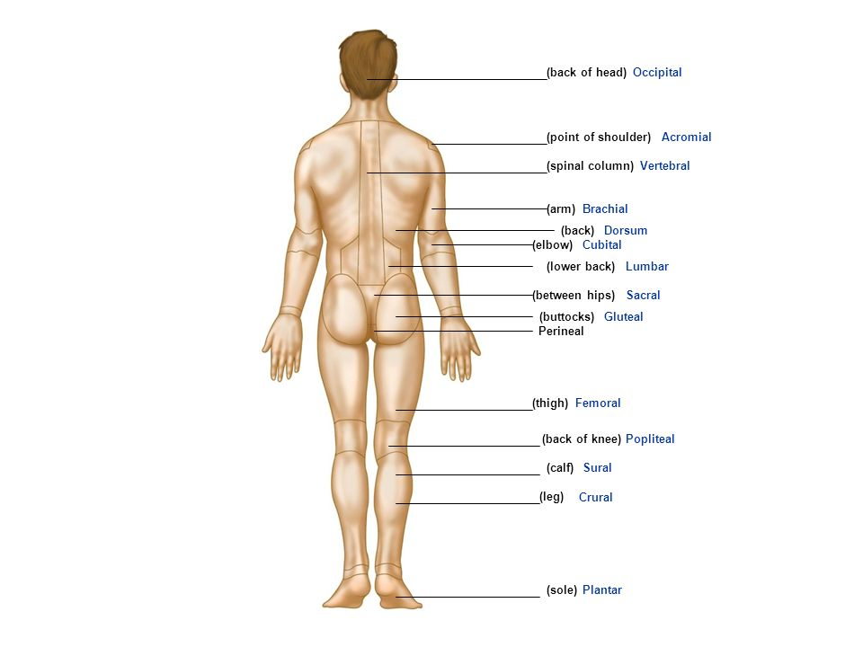 Review Of Scientific Names Of Body Parts Ppt Video Online Download