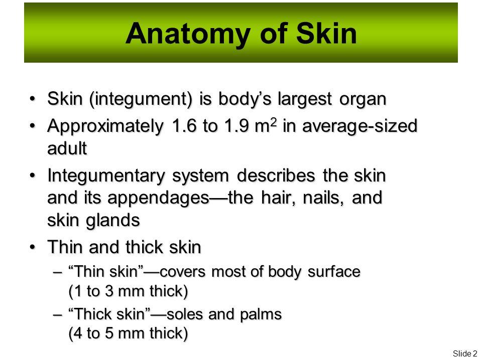 Essentials of Human Anatomy Skin - ppt download