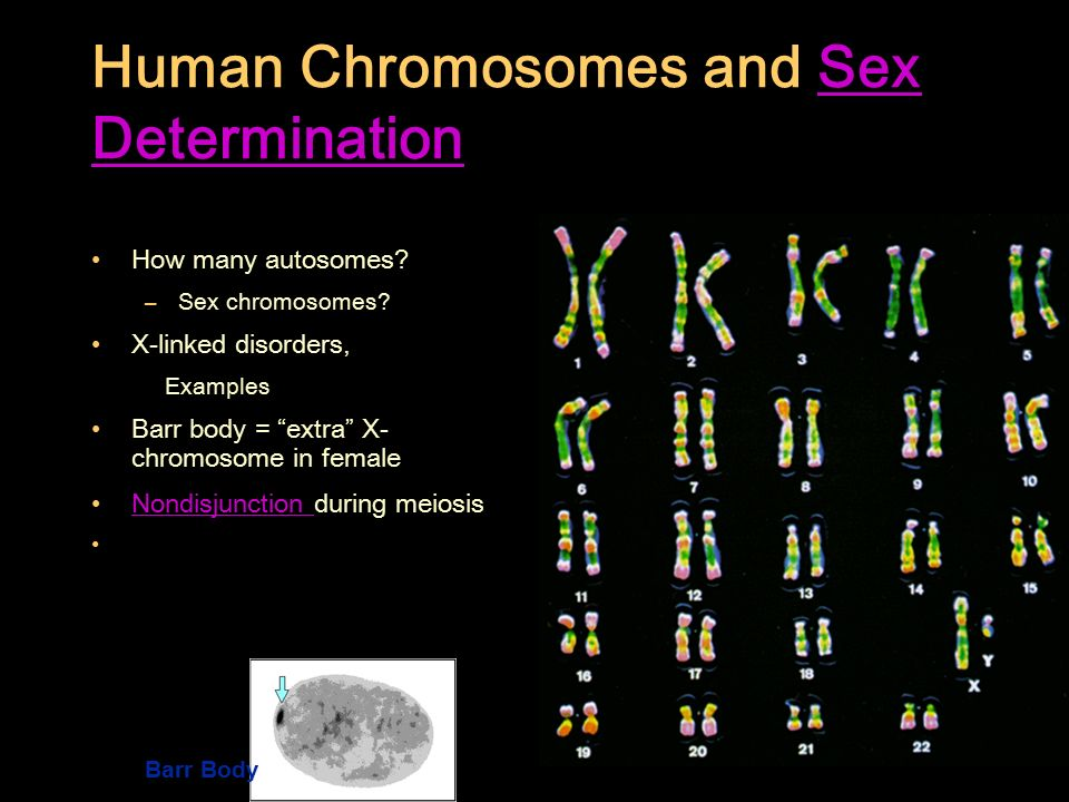 determining-chromosomes-in-sperm-adult-valentine-party