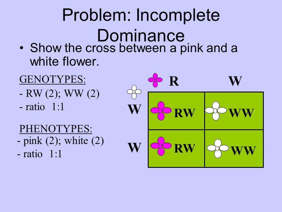 Incomplete Dominance Codominance Multiple Alleles Ppt