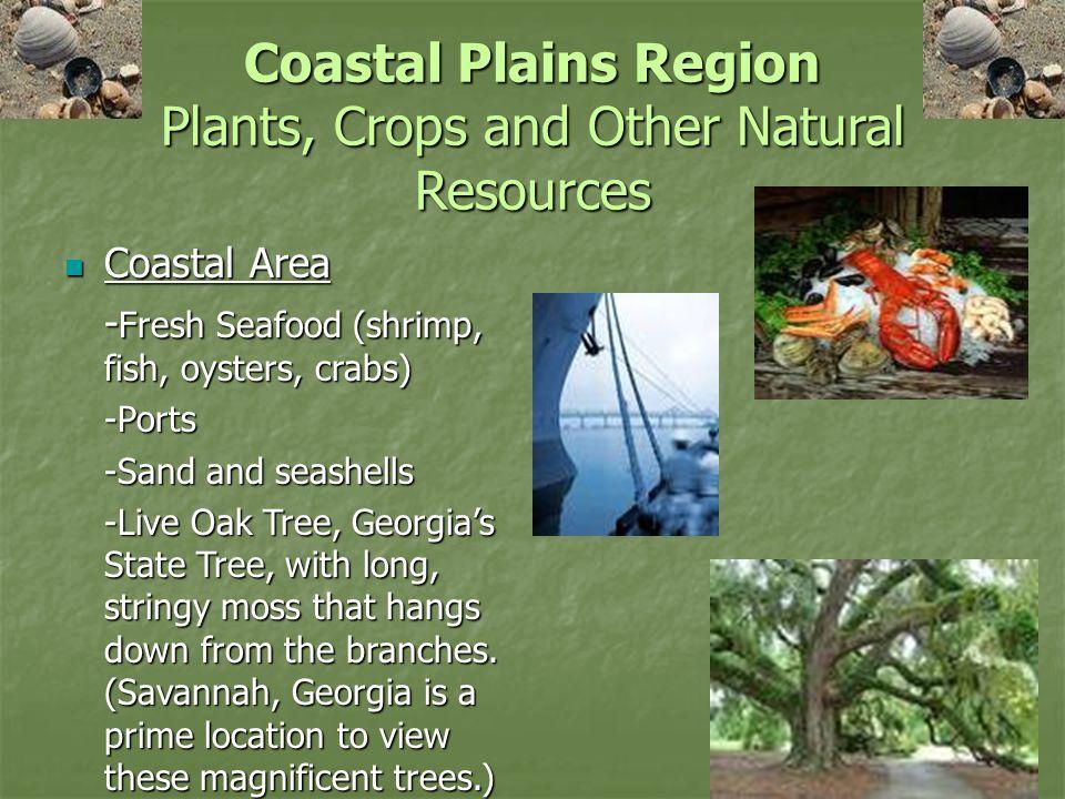 Coastal Plain Region Of Georgia Natural Resources
