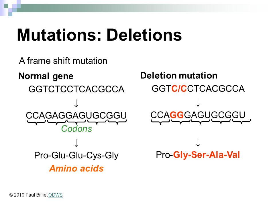 GENE MUTATIONS. - ppt download