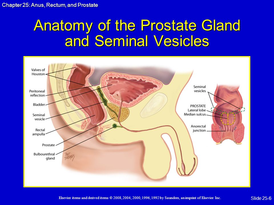 Anus Rectum And Prostate Ppt Video Online Download