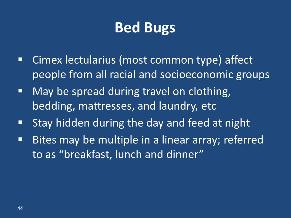 Breakfast Lunch And Dinner Bed Bugs