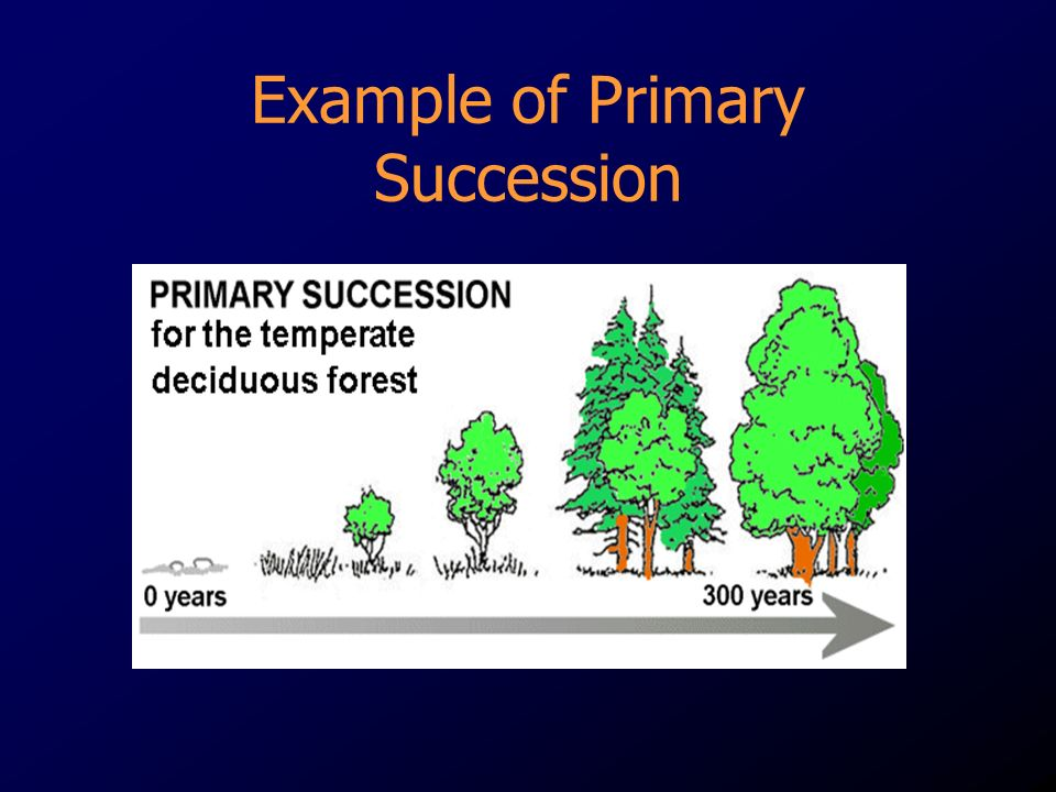 Example of Primary Succession