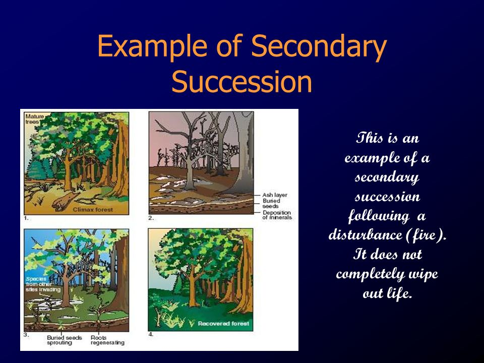 Example of Secondary Succession