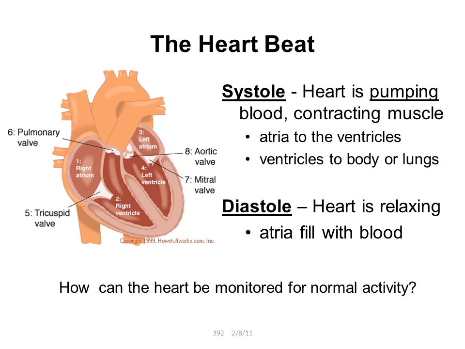 Review Labeled Heart Diagram Ppt Video Online Download