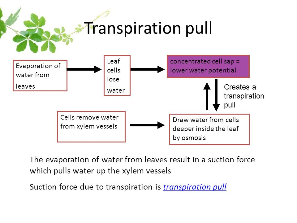 Transport In Living Things Ppt Video Online Download