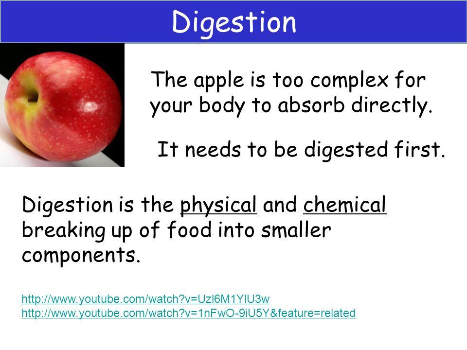 3 Digestion