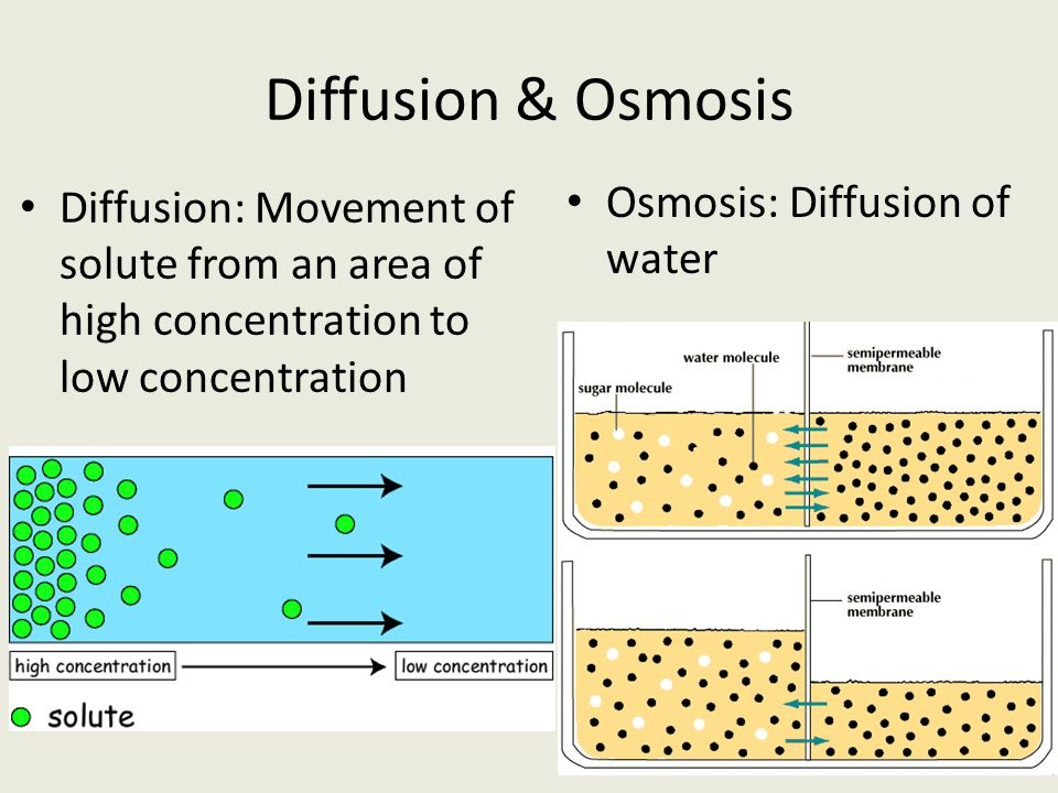 osmosis and diffusion on different concentrations Diffusion and osmosis occur because the concentrations should somewhat equal out (sheppard 1) the main difference is that osmosis is the diffusion of water  water molecules often diffuse across cell membranes, so the process is important.
