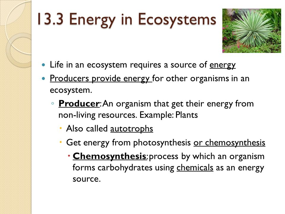 13.3 Energy in Ecosystems Life in an ecosystem requires a source of energy. Producers provide energy for other organisms in an ecosystem.