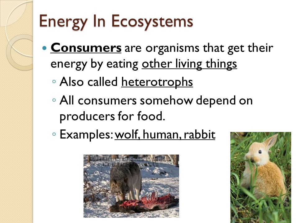 Energy In Ecosystems Consumers are organisms that get their energy by eating other living things. Also called heterotrophs.