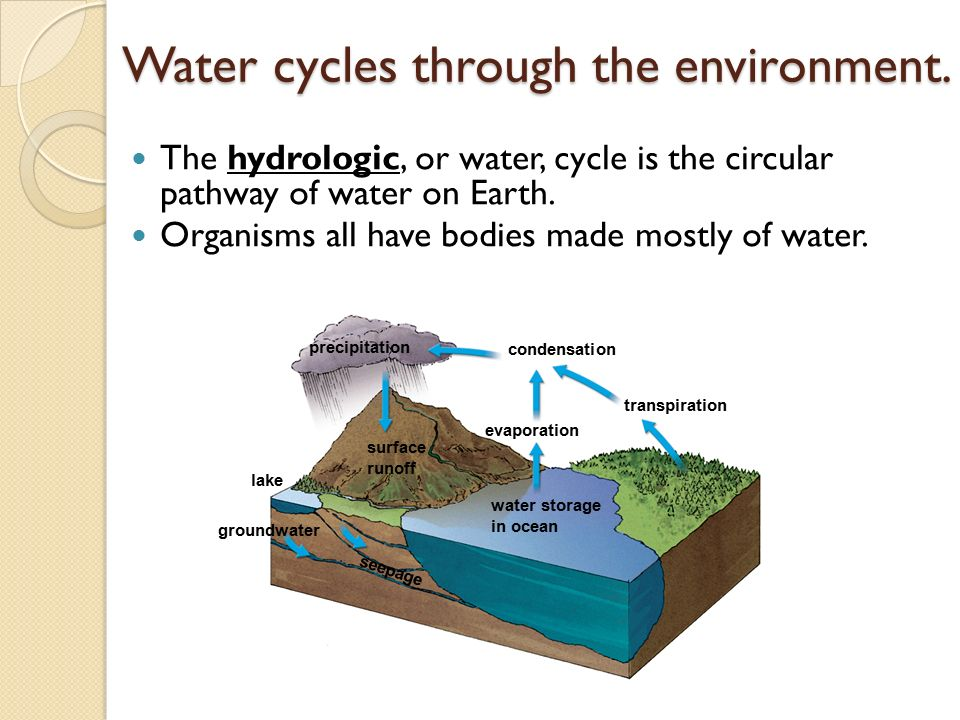 Water cycles through the environment.